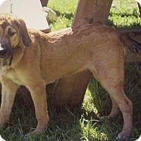 Adopt A Pet :: Raska - Greenville, NC