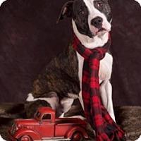 Adopt A Pet :: Trigg - West Allis, WI