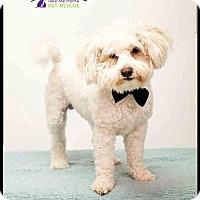 Adopt A Pet :: Elden - Richardson, TX