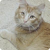 Adopt A Pet :: Bumblebee - Brookings, SD