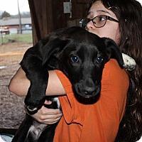 Adopt A Pet :: Mary Ann - Harmony, Glocester, RI