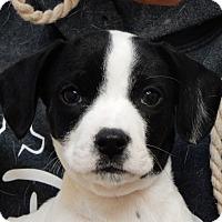 Adopt A Pet :: Cody - Long Beach, NY