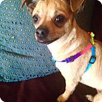 Adopt A Pet :: Valentina! - New York, NY