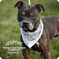Adopt A Pet :: Ruger - Urgent! - Zanesville, OH