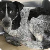 Adopt A Pet :: Brian - Mahopac, NY