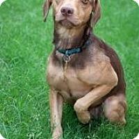 Adopt A Pet :: Charlie Reece - Phoenix, AZ