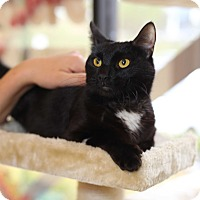 Adopt A Pet :: Cora - Mission Viejo, CA