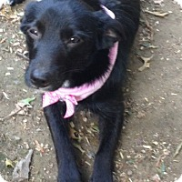 Adopt A Pet :: Corraline - Foster, RI