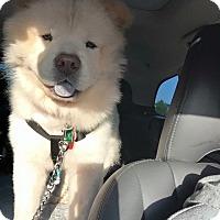Adopt A Pet :: BLIZZARD - Dix Hills, NY