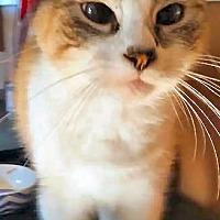 Adopt A Pet :: Baby - El Cajon, CA