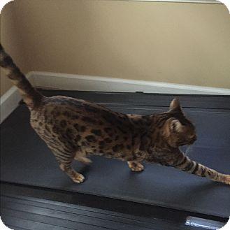 forever home cat rescue orange county ca