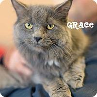 Adopt A Pet :: Grace - Newport, KY