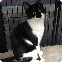 Adopt A Pet :: Mickayla - Horsham, PA