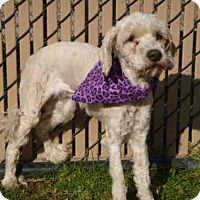 Adopt A Pet :: *EDIE - Norco, CA