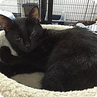 Adopt A Pet :: Lenny - Speonk, NY