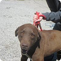 Adopt A Pet :: Blaze - Sparta, NJ