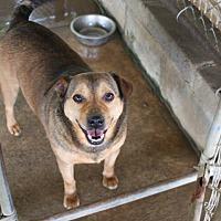 Hound (Unknown Type) Mix Dog for adoption in Nashville, Georgia - Bandit