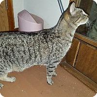 Adopt A Pet :: Abraham - Aurora, IL