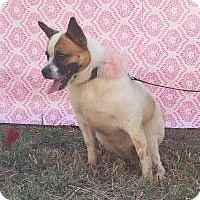 Adopt A Pet :: Anais - Palmetto Bay, FL