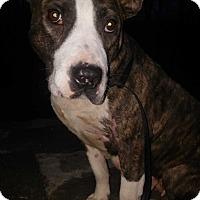Adopt A Pet :: Pink - Cranston, RI