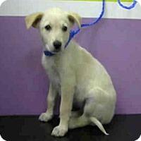 Adopt A Pet :: Pinky - Aurora, CO