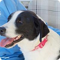 Adopt A Pet :: Gracie Mae - Huntsville, AL