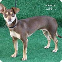 Adopt A Pet :: MULISHA - Hanford, CA