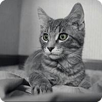 Adopt A Pet :: Sugar - Cedar Rapids, IA