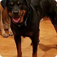 Rottweiler Mix Dog for adoption in Alpharetta, Georgia - Petra