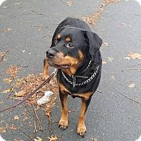 Adopt A Pet :: Ruby - Rexford, NY