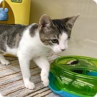 Adopt A Pet :: Wink - Warren, OH