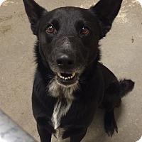 Adopt A Pet :: Murphy - Greensburg, PA