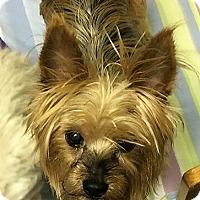 Adopt A Pet :: Casper - Tavares, FL