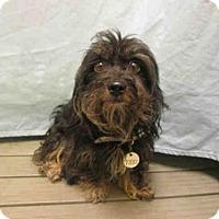 Adopt A Pet :: *ZANE - Upper Marlboro, MD