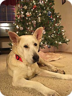 German Shepherd Dog Mix Dog for adoption in Tumwater, Washington - Sky