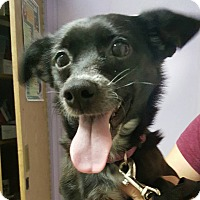 Adopt A Pet :: Vixen - Savannah, GA