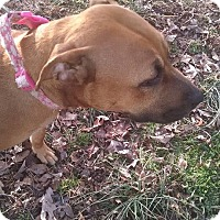 Adopt A Pet :: Annalyce - Greensboro, MD