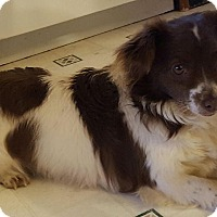 Adopt A Pet :: Mattie - Foster, RI