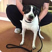 Adopt A Pet :: Pup Pup - Sayville, NY