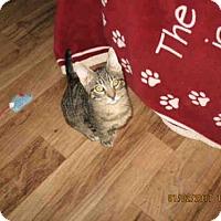 Adopt A Pet :: JENNY - Lathrop, CA