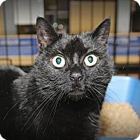 Adopt A Pet :: Munchin - Springfield, PA