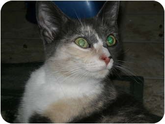 Calico Cat for adoption in Morris, Pennsylvania - Alabama     needs spay sponsor