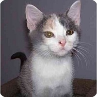 Adopt A Pet :: Savannah - Montgomery, IL