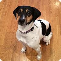 Adopt A Pet :: Pip - Nashville, TN