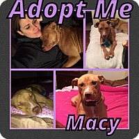 Adopt A Pet :: Macy - Cheney, KS