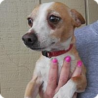 Adopt A Pet :: Junior - Shawnee Mission, KS