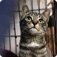 Adopt A Pet :: Mocha - East Brunswick, NJ