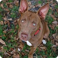 Adopt A Pet :: Bunny - Gainesville, FL