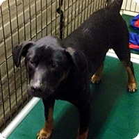 Adopt A Pet :: HUDSON - Coudersport, PA