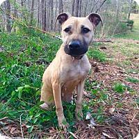 Adopt A Pet :: Hannah - Walton County, GA